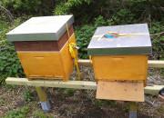 Bienen im TomatOS-Garten.