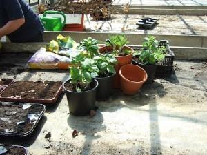 Urban Gardening - Gärtnern in der Stadt