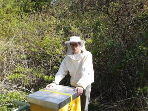 Bienen im TomatOS-Gemeinschaftsgarten.