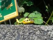 Holiday Innsect eröffnet Insektenhotel bei TomatOS