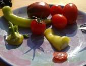 TomatOS - frisch geerntet, frisch auf den Teller -start