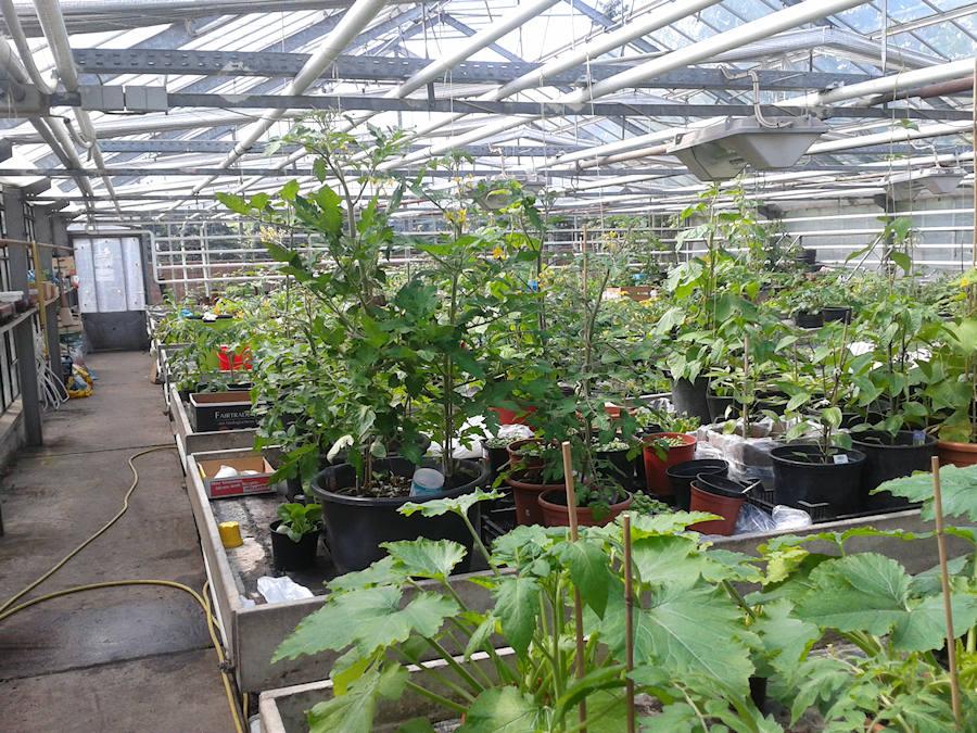 tomatos e v urban gardening osnabr ck. Black Bedroom Furniture Sets. Home Design Ideas