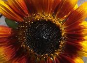 2013 TomatOS Einblicke Impressionen Juni 17