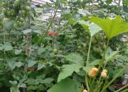 2013 TomatOS Einblicke Impressionen Juni 7