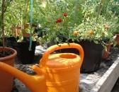 TomatOS - frisch geerntet, frisch auf den Teller - 1