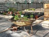 TomatOS-Gartensaison 2015 hat begonnen - 8